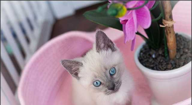 Frisky Cat Cafe - Augustine, Florida