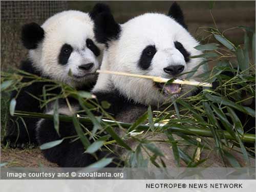 PANDA INSURANCE
