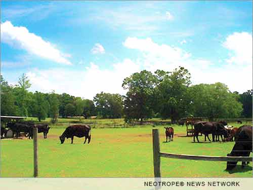 Russel Cattle Ranch